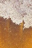 Honey in honeycombs Stock Photos