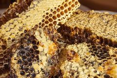 Honey comb with sweet honey. royalty free stock photos