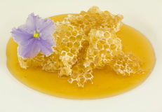 Honey in honeycombs on a white background Stock Images