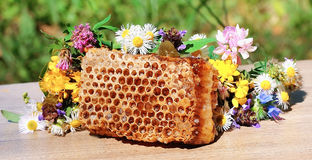 Honey honeycombs and wild flowers Royalty Free Stock Photo