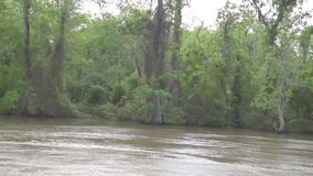 Honey Island Swamp Tour With djungelskog och träd i New Orleans, Louisiana lager videofilmer