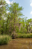 Honey Island Swamp Tour With Jungle Forest and Tree in New Orleans, Louisiana Royalty Free Stock Photo