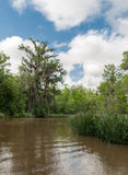 Honey Island Swamp Tour With Jungle Forest and Tree in New Orleans, Louisiana Stock Photography