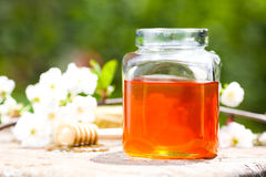 Honey jar. On table. Green nature background stock photo
