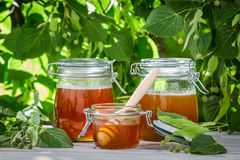 Honey in a jar on the background of linden trees royalty free stock photo