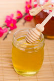 Honey in the jar Stock Images