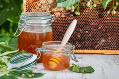 Honey in a jar and honeycomb with linden tree Royalty Free Stock Photography