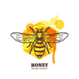 Honey label, emblem, tag design elements. Vector hand drawn outline honeybee on watercolor honeycombs. Stock Photo