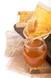 Honey Lemon viburnum Arkivbild