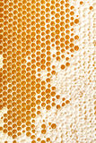 Honey making in honeycombs Stock Images