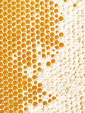 Honey making in honeycombs Royalty Free Stock Photo