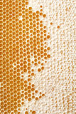 Honey making in honeycombs Stock Photo