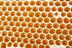 Honey making in honeycombs Stock Photos