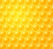 Honey making in honeycombs Stock Photos