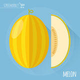 Honey melon. Vector icon.