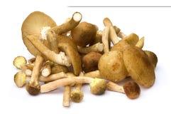 Honey mushrooms. On white background Stock Photo