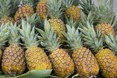 Honey Pineapples. On a market royalty free stock photos