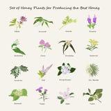 Honey plant set. For producing the best honey. Flowers eps10 vector illustration Stock Photos