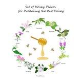 Honey planty set. For produsing the best honey for banner or flyer. Wild flowers and bee. Flat design botanical vector illustration eps 10 Stock Images