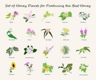 Honey planty set. For produsing the best honey. Flowers eps10 vector illustration Royalty Free Stock Images