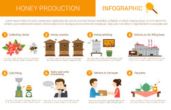 Honey production stages in infographic form. Honey production process stages or steps in infographic form. Bees or honey wasps collecting nectar from flowers Royalty Free Stock Photo