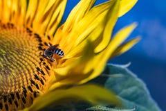 Honey Queen Royalty Free Stock Photos