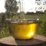 Honey in rays of the evening Sun Stock Photography