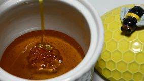 Honey running stock video footage