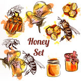 Honey set or collection elements bees comb  and honey in waterco. Lor style Stock Photography