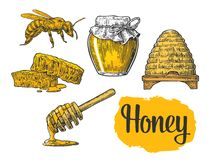 Honey set. Jars of honey, bee, hive, clover, honeycomb. Vector vintage engraved illustration Royalty Free Stock Photography