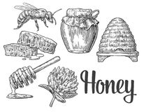 Honey set. Jars of honey, bee, hive, clover, honeycomb. Vector vintage engraved illustration. Stock Photo