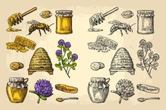Honey set. Jars of honey, bee, hive, clover, honeycomb. Vector vintage engraved illustration. Honey set. Jars of honey, bee, hive, clover, spoon, cracker, bread stock illustration