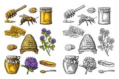 Honey set. Jars of honey, bee, hive, clover, honeycomb. Vector vintage engraved illustration. Honey set. Jars of honey, bee, hive, clover, spoon, cracker, bread royalty free illustration