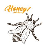 Honey Sketch Bee, conception de produits de Honey Hand Drawn Superfood Organic, illustration de vecteur Image stock