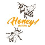 Honey Sketch Bee, progettazione di Honey Hand Drawn Superfood Organic, illustrazione di vettore Immagine Stock