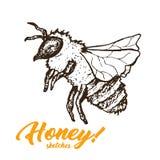 Honey Sketch Bee, progettazione di Honey Hand Drawn Superfood Organic, illustrazione di vettore Immagine Stock Libera da Diritti