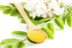 Honey in spoon with acacia flower and leaves Stock Image