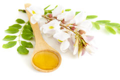 Honey in spoon with acacia flower Royalty Free Stock Images