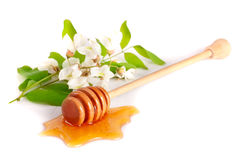 Honey stick with flowing honey and flowers of acacia isolated on white background.  Stock Photo