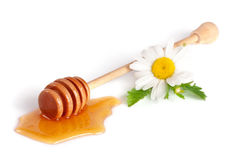 Honey stick with flowing honey and flowers of chamomile  on white background Royalty Free Stock Photography