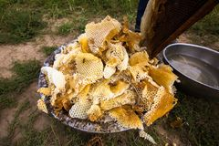 Honey Still crudo en los peines Fotos de archivo libres de regalías