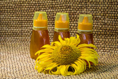 Honey and sunflower Royalty Free Stock Image