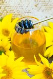 Honey and sunflowers royalty free stock image