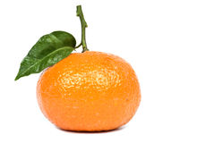 Honey Tangerine Royalty Free Stock Images