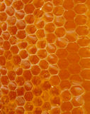 Honey Texture Stock Images