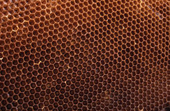 Honey texture. Natural honey texture without honey (abstract background royalty free stock photo