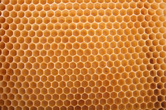 Honey texture Stock Photography