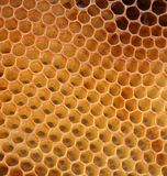 Honey texture without honey Royalty Free Stock Image