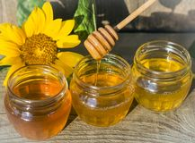 Honey in three jars with a wooden spoon and a sunflower flower in the sun stock image