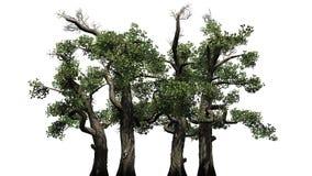 Honey Trees - d'isolement sur le fond blanc Images stock